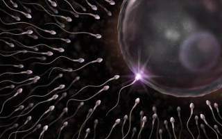 What can affect male fertility?